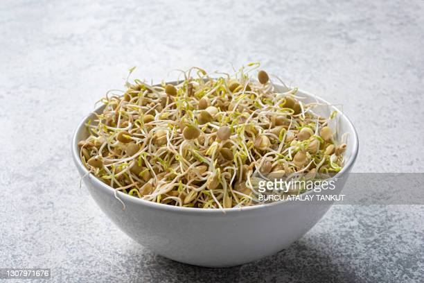 raw sprouted lentils - bean sprout stock pictures, royalty-free photos & images