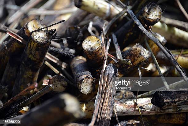 Raw sugarcane sits in a hopper at US Sugar Corp's Palm Beach County Area 3 field in Belle Glade Florida US on Thursday Oct 31 2013 The 2013 US sugar...
