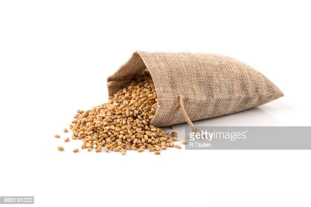 raw wheat grain in sack