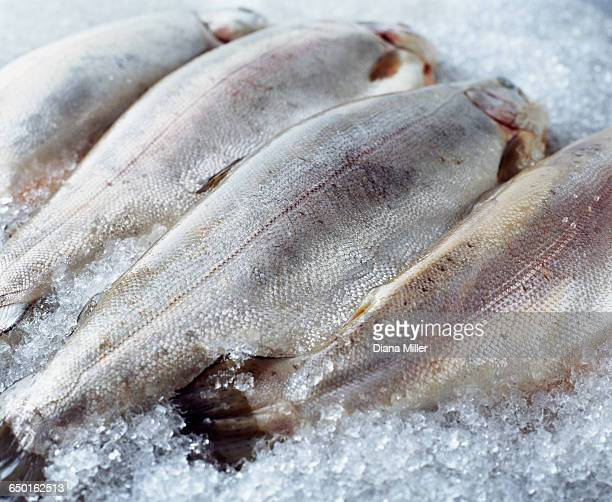 Raw whole bream on crushed ice
