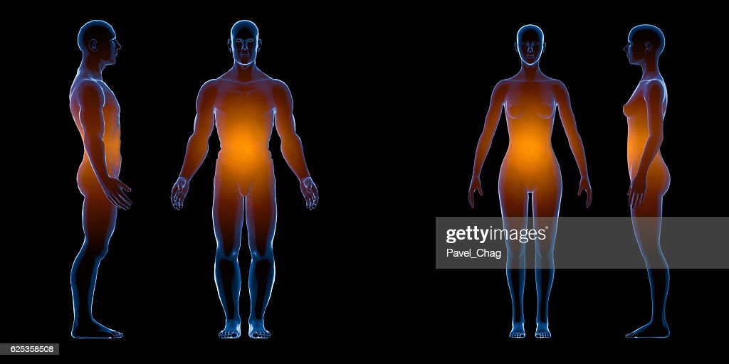 X Ray Human Male Female Body Anatomy Concept Isolate 3d Stock Photo