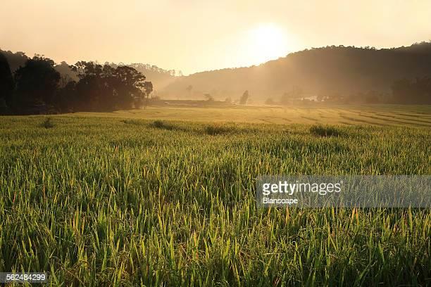 Ray light through terrace rice field