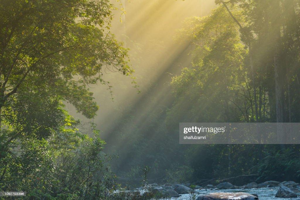 Ray of light : Stock Photo