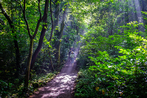 Ray of sunlight over the trail - gettyimageskorea