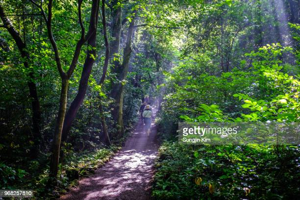 ray of sunlight over the trail - jeju stock photos and pictures