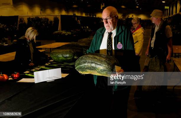 Ray Orme the North of England Horticultural Society fruit and vegetable show secretary works through the night as he arranges a marrow for the giant...