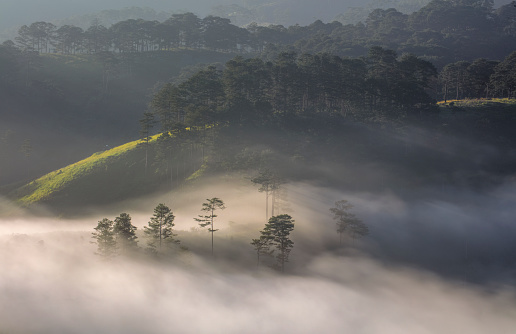 Ray  tree  fog and sunlight in morning - gettyimageskorea