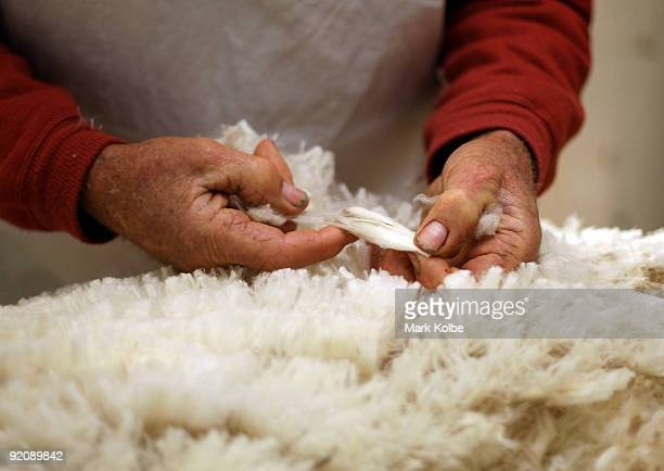 Ray Williams classes the wool during spring shearing at Cherry Hill Pastoral Company property on October 19, 2009 in Uralla, Australia. Shearing in...
