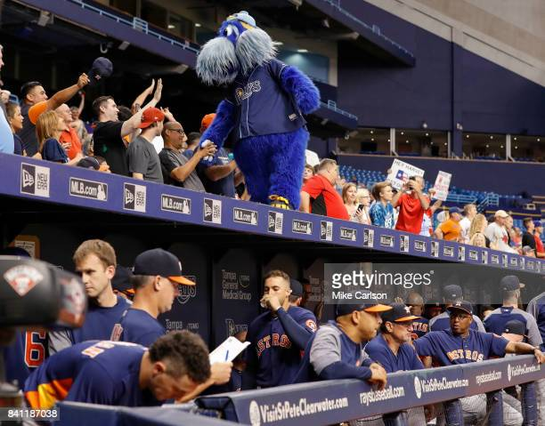 Raymond the mascot of the Tampa Bay Rays entertains fans on top of what is designated as the home dugout of the Houston Astros during the game...