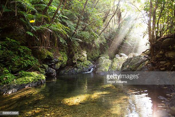 Rays of light above a tranquil river in the jungle