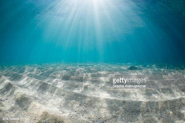 rays of light on sandy sea floor - fonds marins photos et images de collection