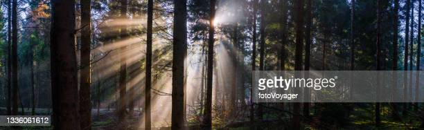 rays of sunlight streaming through green forest woodland wilderness panorama - named wilderness area stock pictures, royalty-free photos & images