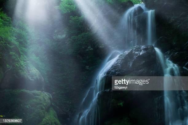 rays of sunlight through trees with waterfalls - isogawyi - fotografias e filmes do acervo