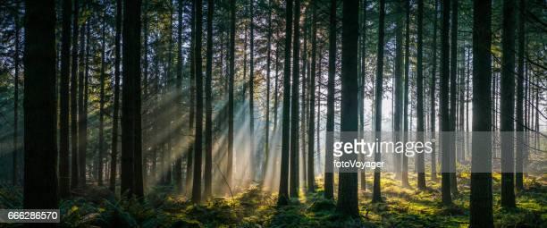 Strahlen der warmen Licht strömt durch den idyllischen Waldlichtung panorama