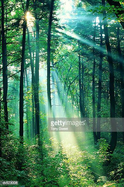 Rays through the forest, Cumberland Gap, Kentucky, USA