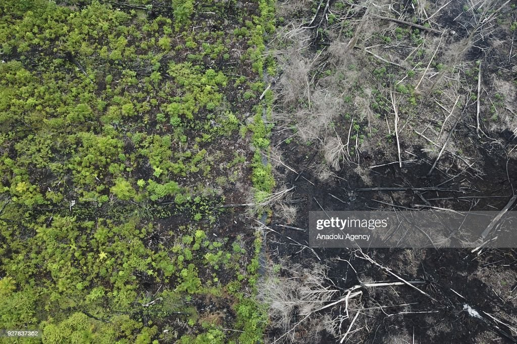 Forest destruction at the Rawa Singkil Wildlife Reserve in Aceh : Foto jornalística