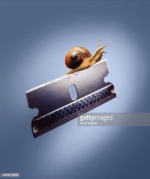 Razor blade and snail
