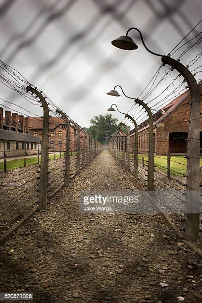 razor wire, concentration camp, auschwitz, poland - auschwitz concentration camp stock pictures, royalty-free photos & images