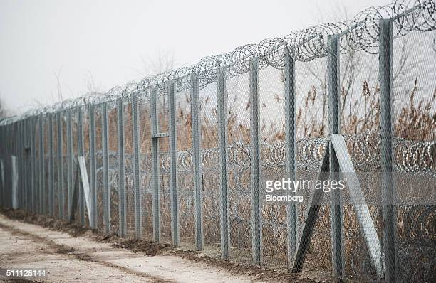 A razor wired topped security fence stands on the HungarianSerbian border near Roszke Hungary on Wednesday Feb 17 2016 The European Union is...