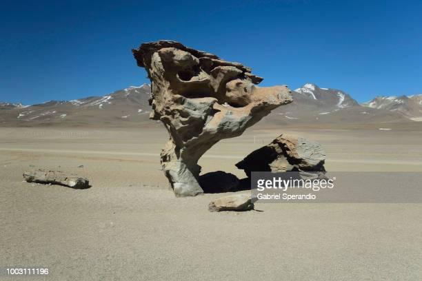 Árbol de Piedra (Stone Tree)
