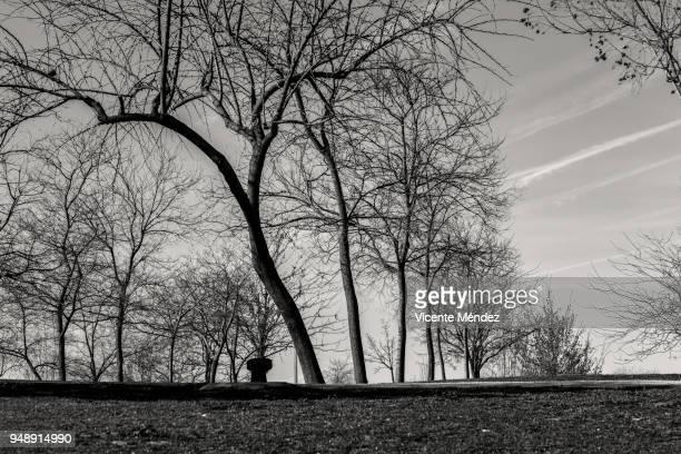 Árboles del parque