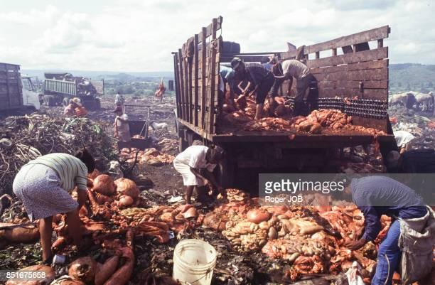 Récupération d'objets divers et de nourriture sur une décharge près de Managua en septembre 1991 Nicaragua