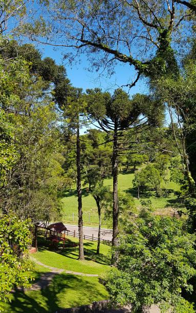 Área rural próximo a cidade de Gramado no sul do Brasil