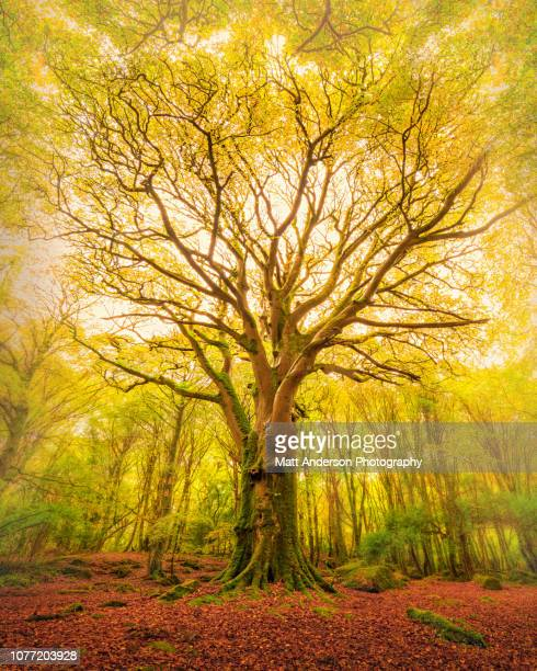 reach barna woods - northern europe stock pictures, royalty-free photos & images