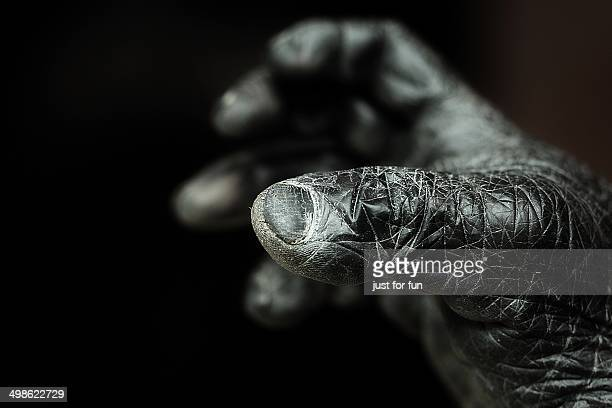 reaching for the stars - animal finger stock photos and pictures