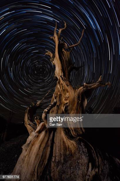 reaching for the stars - barr stock pictures, royalty-free photos & images
