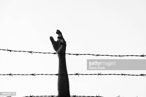 reaching freedom - barbed wire stock pictures, royalty-free photos & images