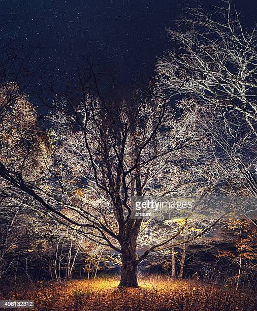reaching into the night - elm tree stock pictures, royalty-free photos & images