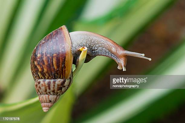 reaching out - garden snail stock photos and pictures