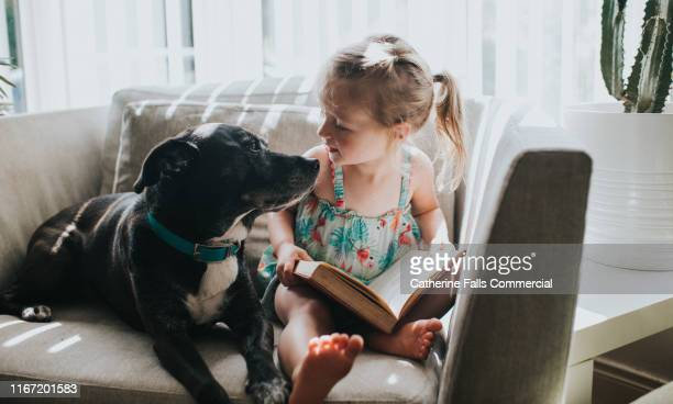 reading a book - dog stock pictures, royalty-free photos & images