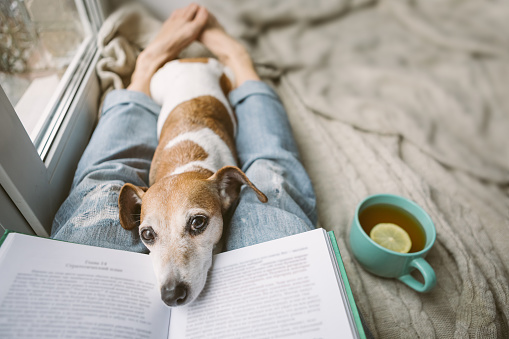 Reading at home with pet. Cozy home weekend with interesting book, dog and hot tea. Beige and blue. Chilling mood 1132975333
