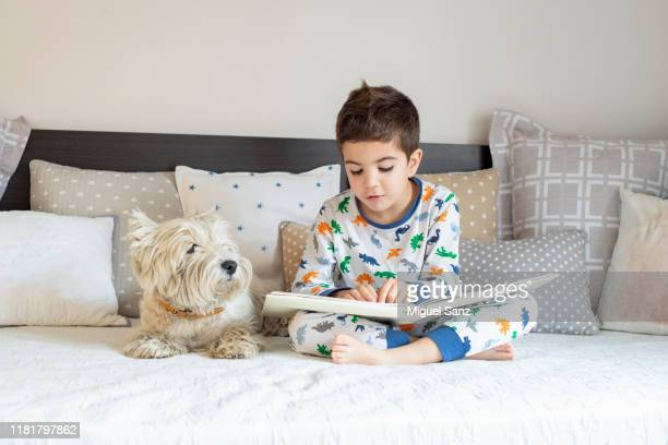 reading book to his westy dog puppy - alleen jongens stockfoto's en -beelden