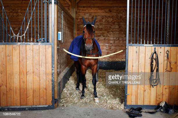 Readly Express is pictured in his box ahead of a training session one week before the Prix d'Amerique on January 18 2019 in Mortrée northwestern...