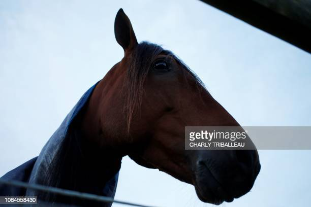 Readly Express stands in his paddock on January 18 2019 in Mortrée northwestern France