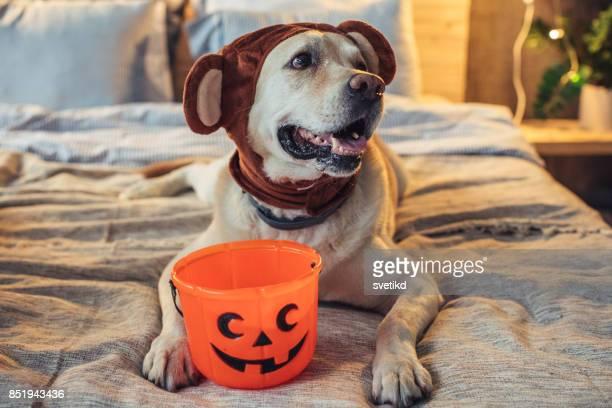 pronto para um pouco de brincadeira de doces ou travessuras - halloween - fotografias e filmes do acervo