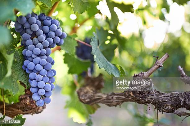 ready to be picked - peopleimages stock pictures, royalty-free photos & images