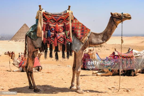 ready to go! - cairo stock pictures, royalty-free photos & images