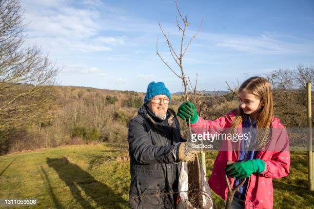ready to plant the tree - plant stock pictures, royalty-free photos & images