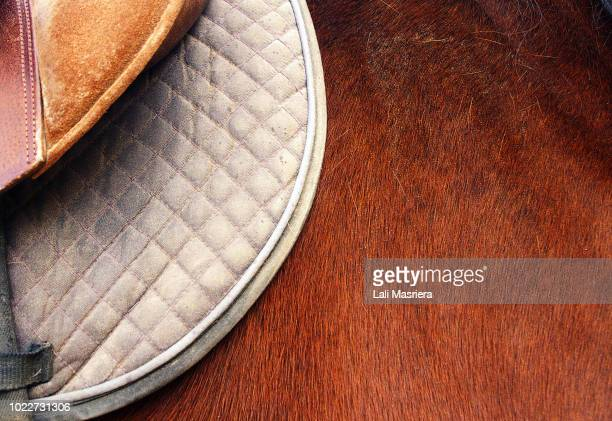 ready to ride - dressage stock pictures, royalty-free photos & images