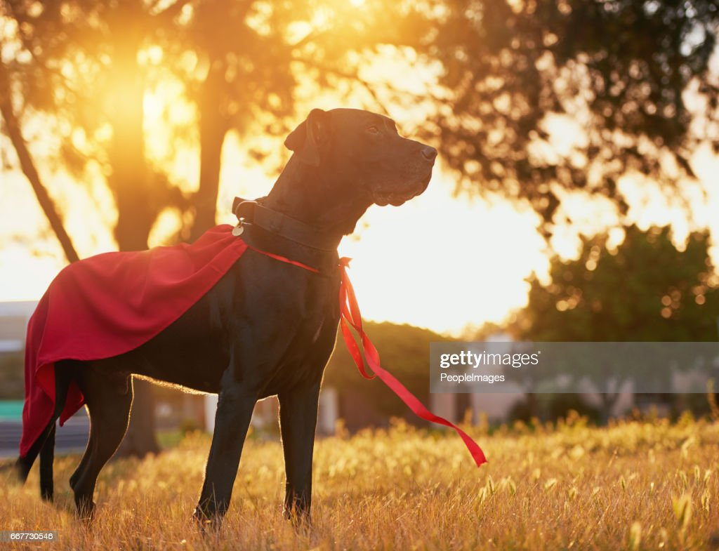 Ready to save the day : Stock Photo