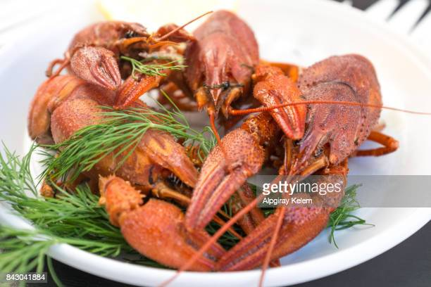ready-to-eat lobster - red lobster restaurant stock pictures, royalty-free photos & images
