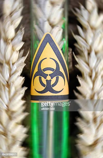 Reagenzglas mit BiogefährdungSymbol und Weizenähre GenWeizen
