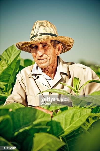 Véritable sur le tabac cubain agriculteur à plantation