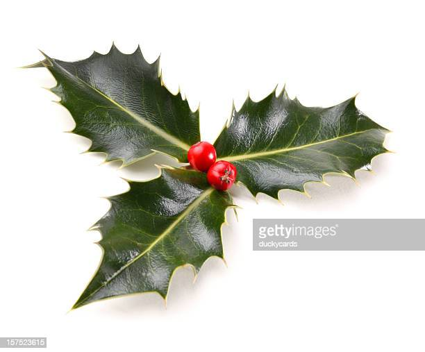 real holly sprig - christmas holly stock photos and pictures