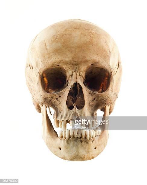 real teschio umano vista frontale - homo sapiens foto e immagini stock