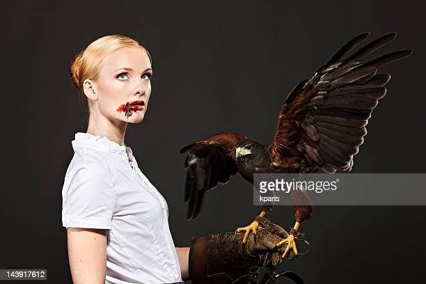 real predator - hawk bird stock photos and pictures